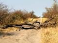 Blokkade Botswana