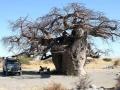 Kamp Botswana