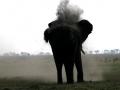 Stof olifant Botswana