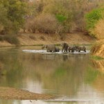 Water olifanten