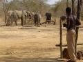 Olifanten bij hek