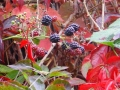 Herfst in Clarat