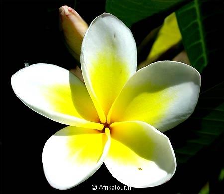 bloemen fotos