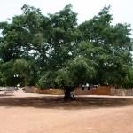 De boom die alles heeft gehoord