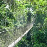 The Canopy Walkway