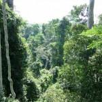 Regenwoud Ghana