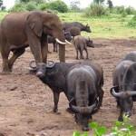 Dieren Kenia