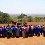 Voorlichting over olifant