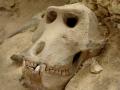 Kenia skelet