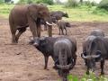 Kenia dieren