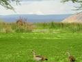 Kenia oever