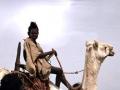 Jongen op kameel