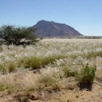 Namibische woestijn