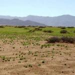 Namibie groene woestijn