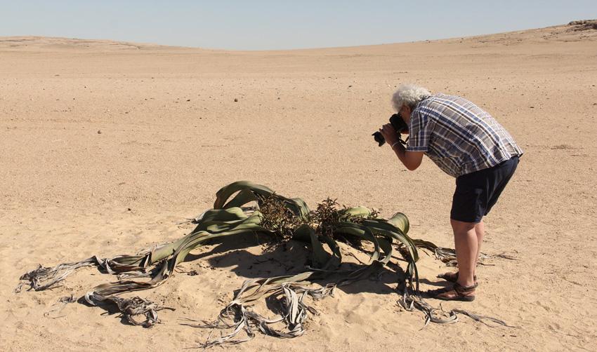 Pieter fotografeert een Welwitschia Mirabilis
