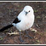 vreemd vogeltje Namibie