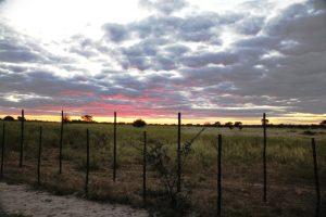 Foto van de zonsondergang met het hek dat de wilde honden moet tegenhouden.