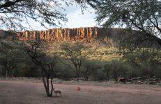 Het Waterberg plateau met op de voorgrond een Dik Dik