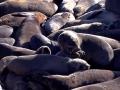 Namibië zeeleeuw 5