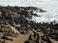 Namibië zeeleeuw 1