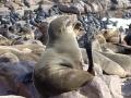 Namibië zeeleeuw 2