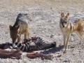 Namibie hyena