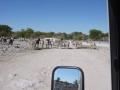 Namibie zebras