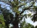 Heiligeboom van Castel