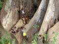 Kinderboom