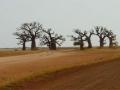7 heilige baobabbomen