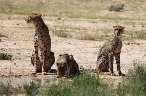 Cheeta's Namibië