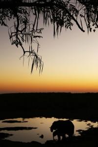 Olifanten in avondlicht