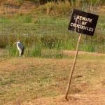 Zimbabwe krokodillen