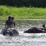 Zimbabwe olifantenbad