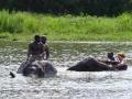Zimbabwe olifanten bad