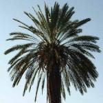 Foto ZuidAfrika palm