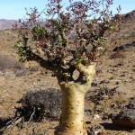 Foto Zuid Afrika boom