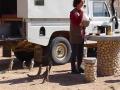 Kalaharimarmot