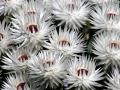 Bloemen fynbos