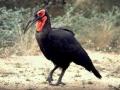 d-101vogel11.jpg